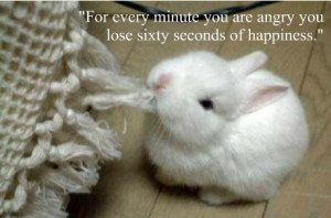 Cute Baby Animals With Sayings From cute baby animals