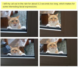 funny outside cat, faces