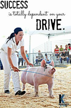 Pigs Fair, 4H Pigs, Livestock Showing Quotes Pigs, Girls 3, Ag Quotes ...