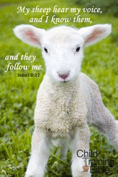 My Sheep. - John 10:27,