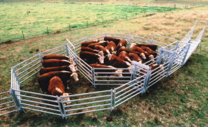 FREE On-Farm Cattle Yard Measure & Quote