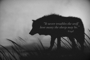 It never troubles the wolf