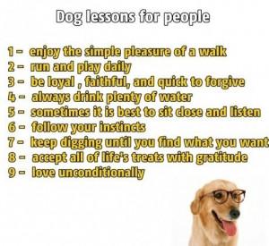 Dog wisdom. I will follow these laws.