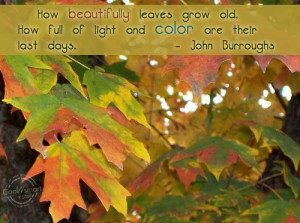 Fall Quotes and Sayings