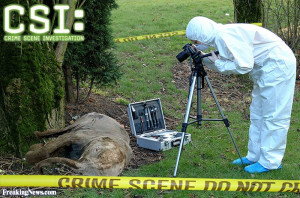 Funny Csi Investigating...