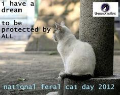 national feral cat day october 16 it s actually national boss day too ...