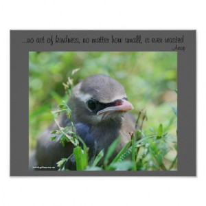 Baby Bird Kindness Quote Inspirational Poster
