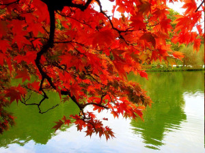 Romantic-Autumn-Wall papers (6)