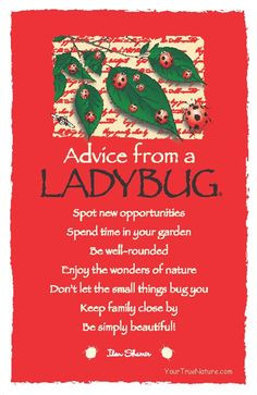 Advice from a Ladybug More