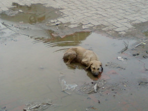 ... give special attention to the 600.000.000 stray animals in the world