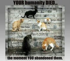 Quotes : cats and dogs (breeding, shelter, BSL, killing...)