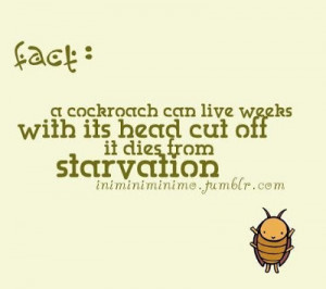 Funny Cockroach Pictures Images Quotes Just Stupid And Picture