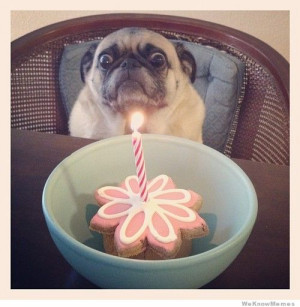 20 Funniest Pug Memes Gifs and Comics – Whether it's their ...