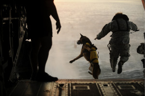 My Favorite Photo Ever: A Military Dog Jumping Out of a Helicopter
