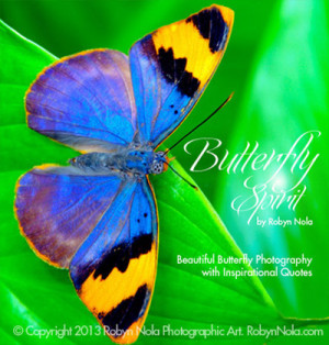 ... : beautiful, butterflies, butterfly, nature and inspirational gifts