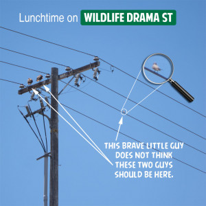 Lunch Time Funny Quotes Lunchtime-on-wildlife-drama-