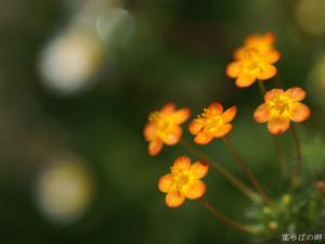 Cute flowers image