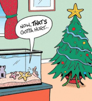 ... funny holiday season picture with a christmas star on top of a tree a