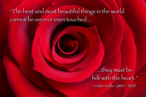 topics: macro nature flower quote red day love
