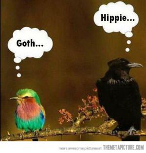 Funny photos funny birds crow goth hippie