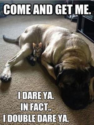 More funny Animal Memes (20 Pics)