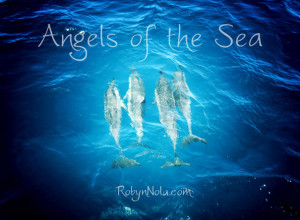 Dolphins are the angels of the sea.
