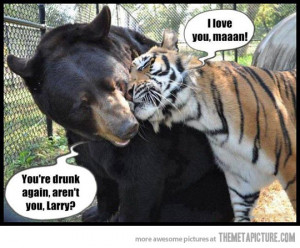 funny tigers bear friends