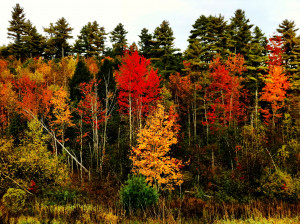 Best State Parks to See Some Fall Foliage