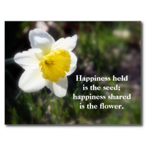 Daffodil Happiness Photography & Quote Postcard