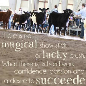 Cattle Showing | The Big East: Jackpot & Youth Beef Cattle Show ...