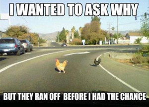 funny chicken crossing the road