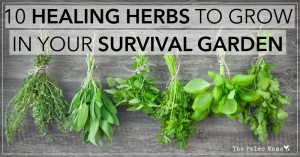 Herbs have been used for centuries to sooth and to heal. According to ...