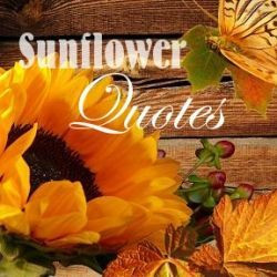 love sunflowers because they are such a cheering and happy flower to ...