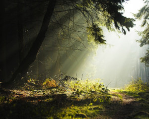 Wallpapers com inclinada maravilhosa natureza selvagem da floresta