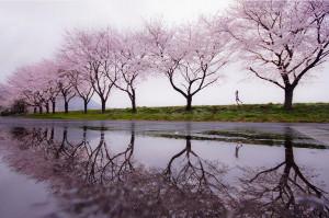 Rain of spring Photography by Kouji Tomihisa