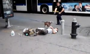 The Video of an NYPD Officer Shooting an Aggressive Pit Bull on the ...