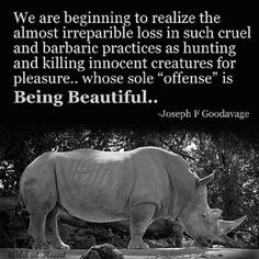 ... quotes animal rights animal quotes google search beautiful quotes