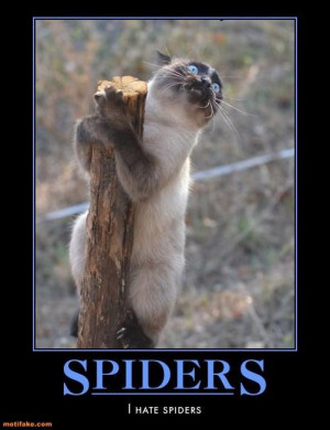 Funny cat I hate spiders