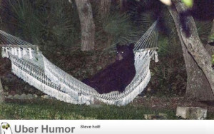 black bear was found lounging in a hammock in Daytona Beach
