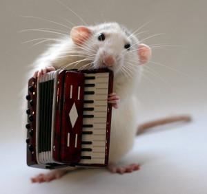 机灵聪明又可爱的小白鼠
