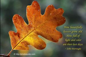 John Burroughs Quotes (Images)