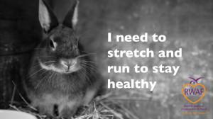 Rabbit Awareness Week - Image taken from Rabbit Welfare Association ...