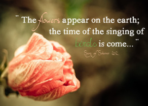 ... earth; the time of the singing of birds is come...Song of Solomon 2:12