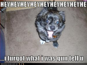 funny-dog-pictures-excited-forgetful-dog