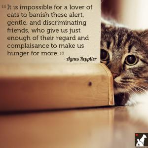 cat love quotes