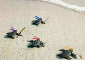 baby turtle, cute, sea turtle, turtle