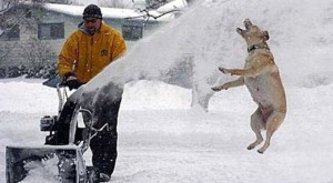 These funny dogs love the snow and they cannot help but show it!
