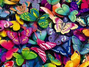 yorkshire_rose Butterflies