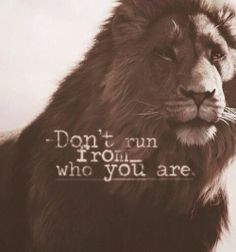 ... chronicles of narnia lion roaring aslan tattoo narnia aslan quotes