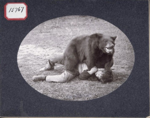-sense bear safety tips, researchers have found that long black bears ...